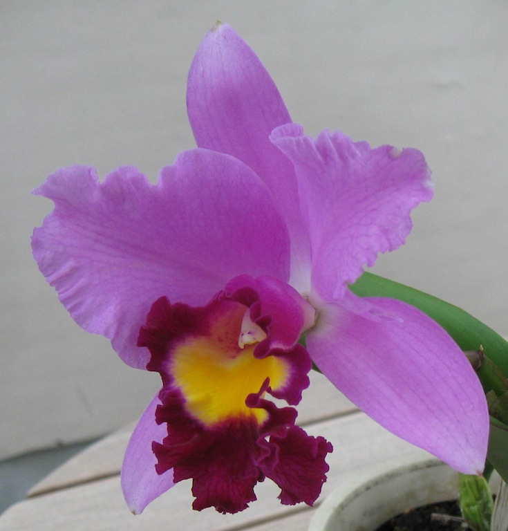Blc Chian Tzy General Ct. Samuel 12.09.08 008